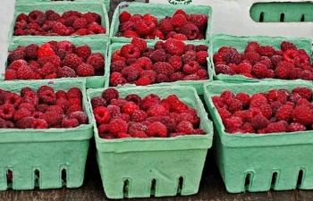 strawberries.liesurefarm.2013